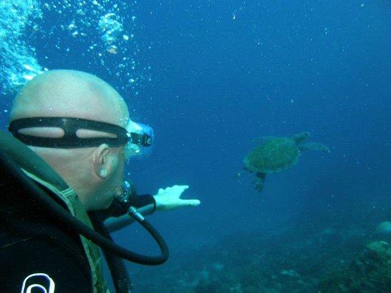 Nova Villa Tortuga: Buceando con las tortugas!!