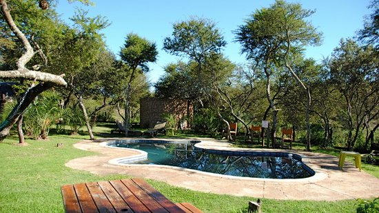 Nyaru Game Lodge: Swimming pool