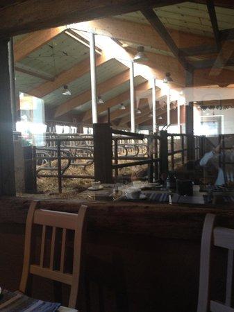 Agriturismo Rini: Vista dalla sala colazione