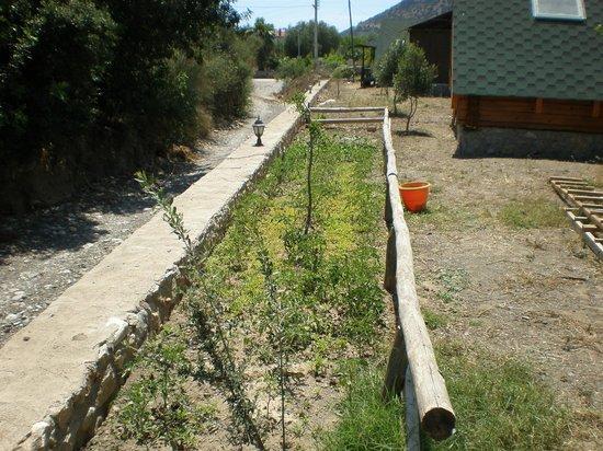 DatcAnka Ahsap & Kutuk Evler: Bahçemiz - 2