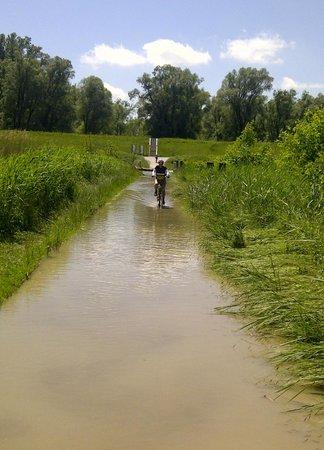 Donauradweg: Crossing a flooded causeway