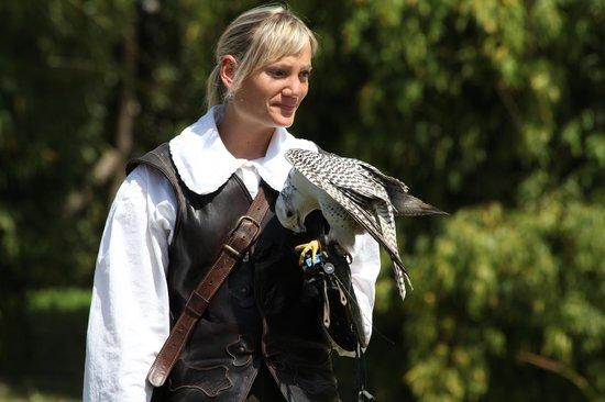 Falconeria Locarno: falco
