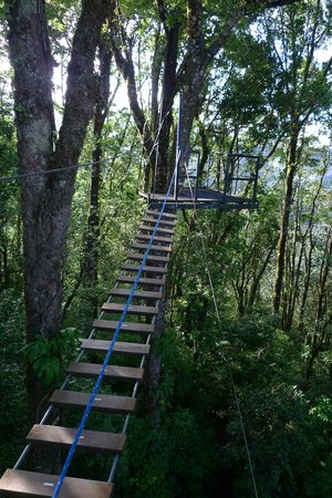 El Establo: monkey bridge on the hotel's jungle trails