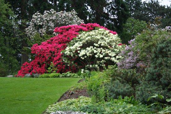 Rob Roy Hotel: Rhododendrons in the Botanic Gardens of Edinburgh (photo Alie Valkema)