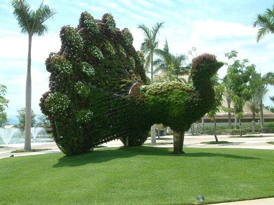 Pavo real a la entrada picture of jardines de mexico for Jardines mexico