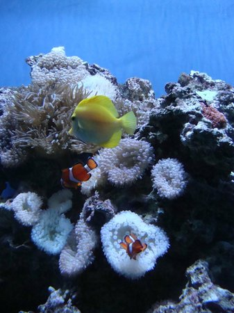 Moody Gardens: Tropical fish