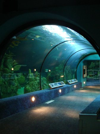 Moody Gardens: Shark tunnel