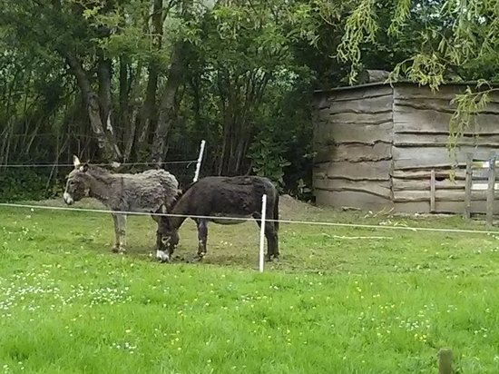 Le Retour aux Sources : Donkeys