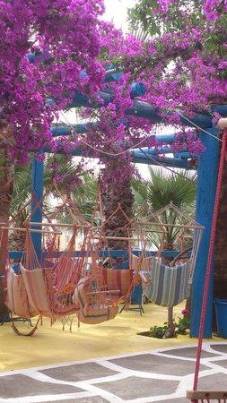 Palm Bay Hotel : swinging