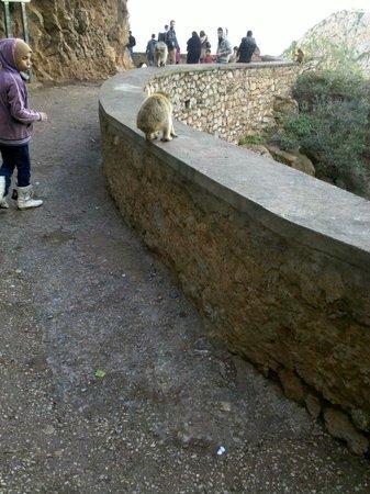 Bejaia, Aljazair: Início da caminhada do parque