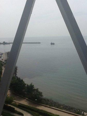 Sol Marina Palace: Dolphin watching