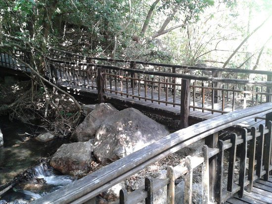 Hotel Borinquen Mountain Resort: Camino hacia las aguas termales
