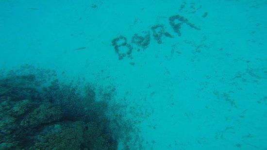 Coral Gardens: Bora Love