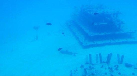 Atlantis Submarines Waikiki: Lucky to see a shark!