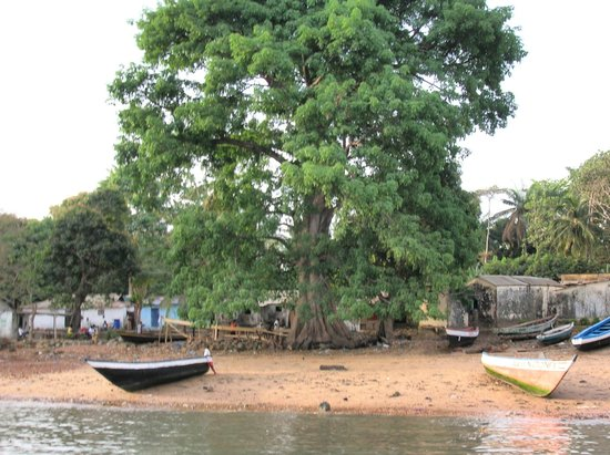 La Villa Elijah: un vieil Arbre du village
