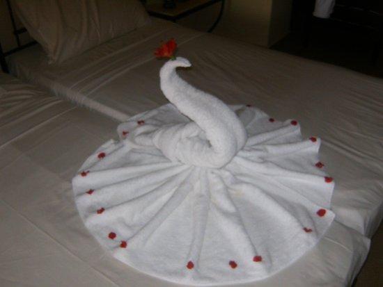 Jaz Makadi Saraya Resort: today we got a Peacock