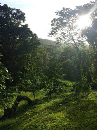 Ceiba Country Inn: Backyard