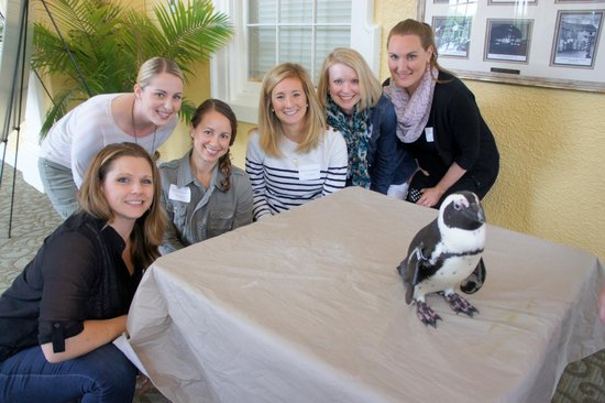 The Maryland Zoo: Tails the penguin