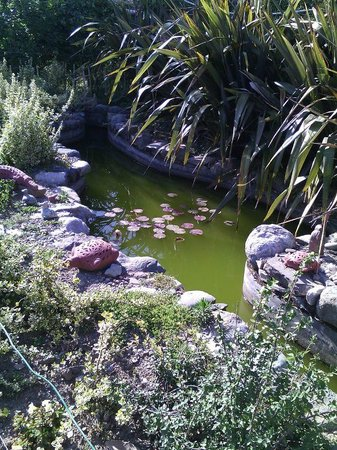 Emerald Trail: Lotus pond with Gold Fish