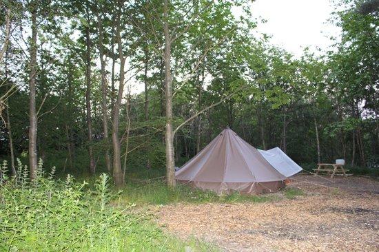 Eco Camp UK - Beech Estate Woodland Campsite: Bell tent