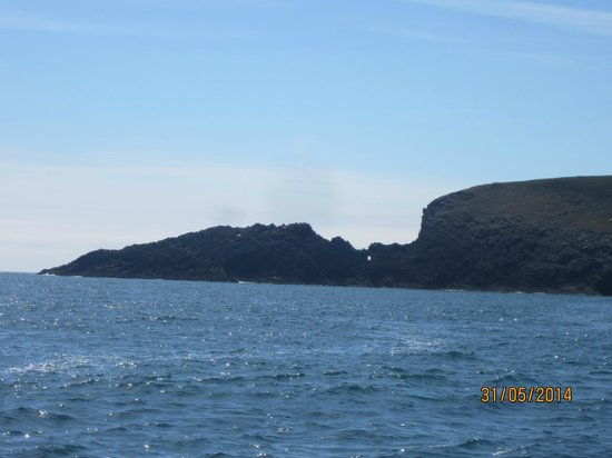 Whale Watch West Cork : Cape Clear