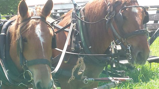 Fair Winds Farm: Lovely hayride with Robin and Jess the Suffolk Punches