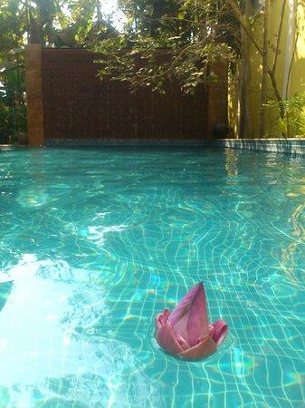 Golden Mango Inn: Pool