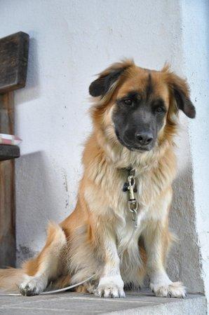 Pension Moarhof: Lion der der Haus- und Hofhund