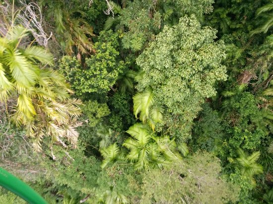 Skyrail Rainforest Cableway: above the tree tops