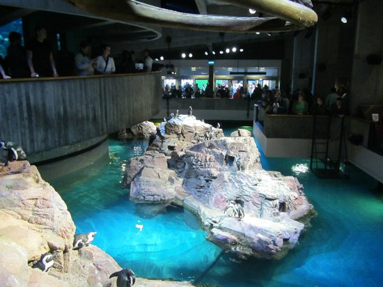 New England Aquarium: Penguins with center tank off to the left