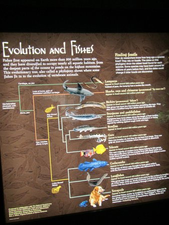 New England Aquarium: Information on evolution and where fish fit into it