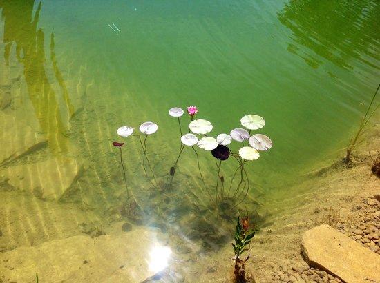Mas Ardevol : Piscina ecològica