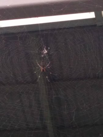 Skyrail Rainforest Cableway: Along came a spider....