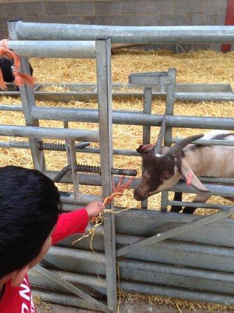 Mead Open Farm: Feeding a goat