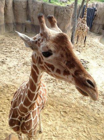 Dallas Zoo : So friendly!