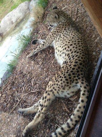 Dallas Zoo: Sleeping