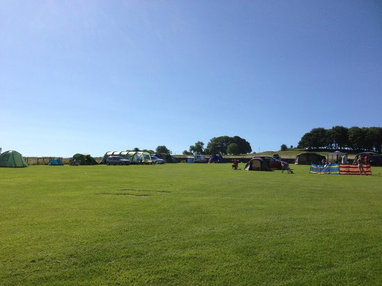 Camping Field at Lime Tree Holiday Park