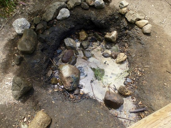 "Placerita Canyon Nature Center: natural ""white oil"" spring"