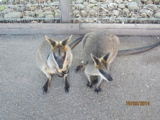 Featherdale Wildlife Park: G'day !