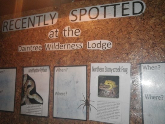 Daintree Wilderness Lodge : Wildlife wanting to be noticed