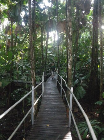 Daintree Wilderness Lodge: Catwalks between buildings