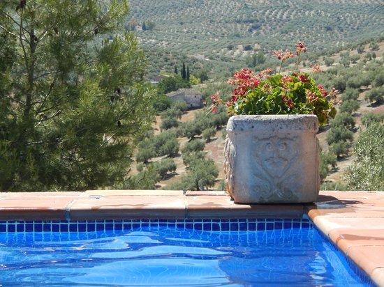 Cortijo Las Salinas: Vue de la piscine