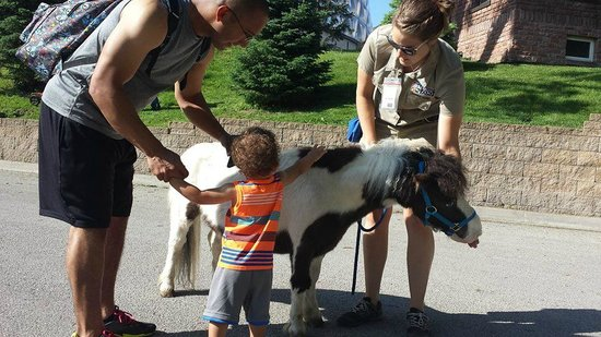 Henry Doorly Zoo: Miniature horse!