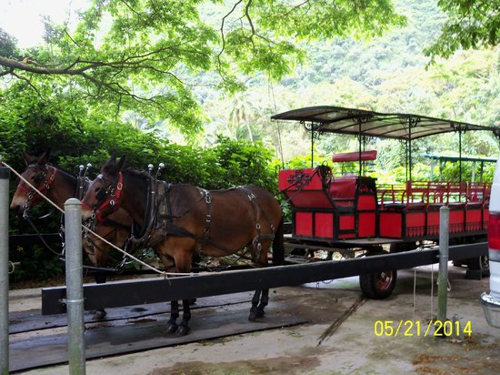 Waipi'o Valley: Wagon tour