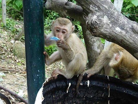 Monkey Hill : Little monkey