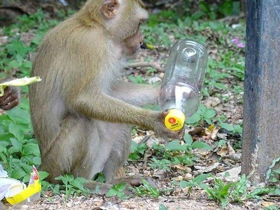 Monkey Hill : medium monkey