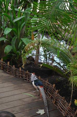 Selva Viva: En en interior del parque