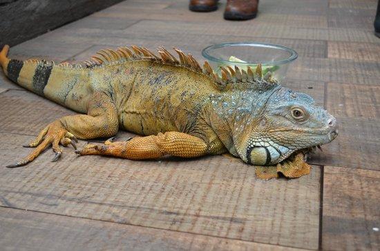 Selva Viva: En el interior del parque una iguana