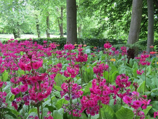 The Alnwick Garden: Loved the colour!