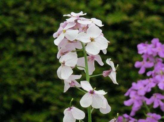 The Alnwick Garden: Pretty blooms